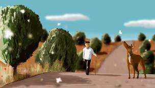 paseo por el olivar