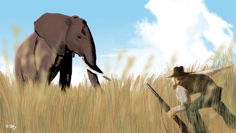 safari de elefantes